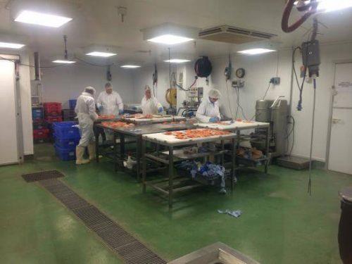 Darbas moterims zuvies fabrike Olandijoje