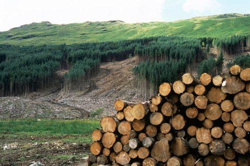 Brangiai nupirkčiau mišką, padedu tvarkyti popierius